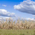 Monsanto et le fichage secret de ses opposants. Que dit le RGPD ?
